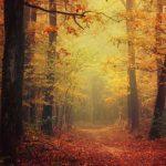 Le libere associazioni: quel sentiero nascosto alla scoperta di sé